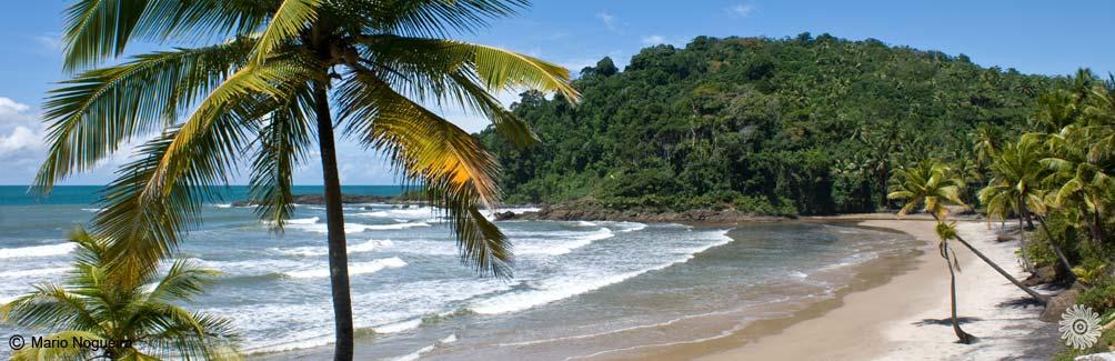 Itacare Com Beaches Itacar 233 Beach Bahia Brazil